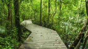 Den tropiska rainforesten i asia med trä går vägen, Krabi, Thailand Royaltyfri Bild