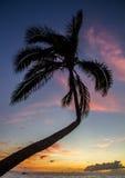 Den tropiska solnedgången gömma i handflatan royaltyfri bild