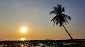 Den tropiska solnedgången med gömma i handflatan konturn arkivbild
