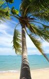 Den tropiska stranden gömma i handflatan royaltyfri fotografi