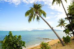 Den tropiska stranden gömma i handflatan royaltyfri bild
