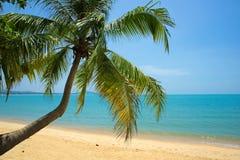 Den tropiska stranden gömma i handflatan Royaltyfria Bilder