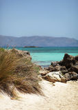 Den tropiska stranden med buskar och vaggar och turkosvatten arkivbild