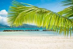Den tropiska stranden med gömma i handflatan Arkivfoton