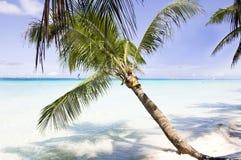 Den tropiska stranden med gömma i handflatan arkivfoto