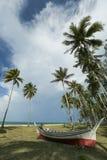 Den tropiska stranden med gömma i handflatan royaltyfri fotografi