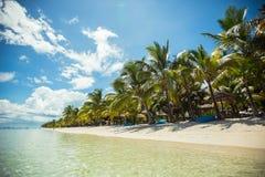 Den tropiska stranden med gömma i handflatan och blått vatten royaltyfria bilder