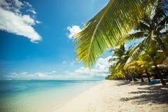 Den tropiska stranden med gömma i handflatan och blått vatten arkivbild