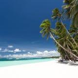 Den tropiska stranden med gömma i handflatan och vit sand Royaltyfri Bild