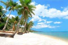 Den tropiska stranden med gömma i handflatan Arkivbilder