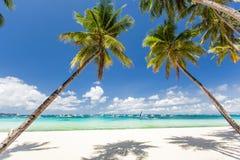 Den tropiska stranden med härligt gömma i handflatan och vit sand Royaltyfri Bild