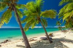 Den tropiska stranden med kokosnötpalmträd och den klara lagun, Fiji är Royaltyfri Bild