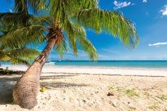 Den tropiska stranden och gömma i handflatan i Jamaica på det karibiska havet arkivbild