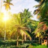 Den tropiska trädgården med kokosnöten gömma i handflatan och en ananaskoloni Shri Laka arkivfoton