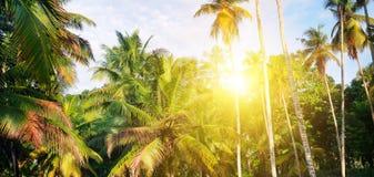 Den tropiska trädgården med kokosnöten gömma i handflatan och en ananaskoloni Shri Laka Brett foto royaltyfri foto