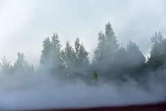 den täta dimmaskogen sörjer Royaltyfria Bilder