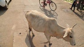 Den tunna fattiga kon korsar en gata india stock video
