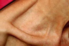 Den tunna halsen och benet av nyckelbenet Arkivfoton