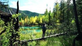 Den turist- kvinnan med ryggsäcken och hatten promenerar ett stupat träd vid den blåa bergsjön i skogen arkivfilmer