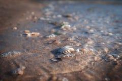 Den tvättade döda krabban i sorl vinkar längs Nordsjönstranden fotografering för bildbyråer