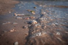 Den tvättade döda krabban i sorl vinkar längs Nordsjönstranden royaltyfri bild