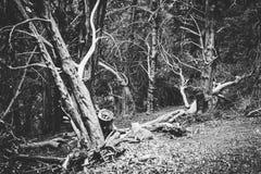 Den tysta sikten av skogsmarken parkerar i Britannien svart white arkivfoton