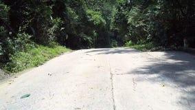 Den underbara gråa bruna vägen på den täta skogen med enormt gömma i handflatan stock video