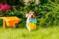 Den underhållande trädgårdsmästaren med att bevattna kan plantera blommor på trädgården Royaltyfria Foton