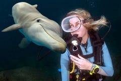 Den undervattens- delfin möter en blond dykare royaltyfri bild