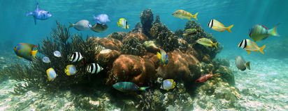 Undervattens- panorama i en korallrev Royaltyfri Bild