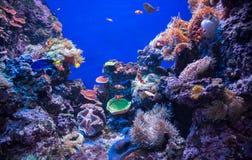 Den undervattens- världen är ett akvarium med fisken och korall med blå bakgrund, Singapore Arkivbild