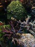Den undervattens- världen av Atlanticet Ocean Arkivbild