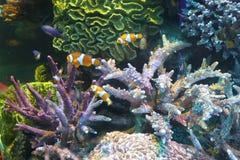 Den undervattens- världen av havet Arkivfoto