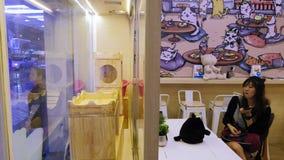 Den unga asiatiska kvinnan håller ögonen på en katt i en kattcafé i Bangkok, Thailand arkivfilmer