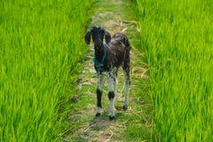 Den unga barnflicka-geten kostar på en vandringsled Arkivfoton