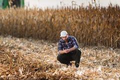 Den unga bonden undersöker havre i havrefält under skörd Fotografering för Bildbyråer