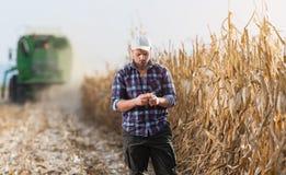 Den unga bonden undersöker havre i havrefält under skörd Arkivbild