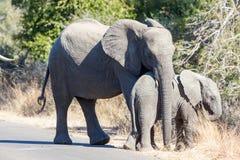 Den unga elefantomfamningen behandla som ett barn elefanten Royaltyfri Fotografi
