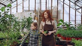 Den unga entreprenördrivhusägaren och hennes lilla dottern i förkläden som går i växthusinnehav, lade in växten som ser lager videofilmer
