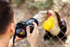 Den unga fotografmannen tar en bild av en stor hornbill också som är bekant som den stora indiska hornbillen eller stor pied horn Arkivbilder