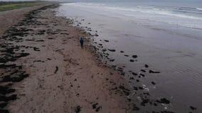 Den unga grabben går över en strand på Atlanticet Ocean lager videofilmer