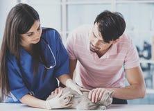 Den unga grabben kom med den trevliga katten för besök till den unga veterinären Arkivbild