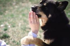 Den unga härliga flickan går på en ljus solig dag med hennes hund royaltyfri fotografi