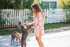Den unga härliga flickan med långt hår spelar med hundkapplöpning royaltyfria foton