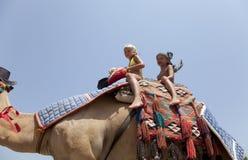 Den unga härliga kvinnan rullar barnen på en kamel Arkivfoton