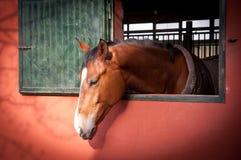 Ung häst Royaltyfri Foto