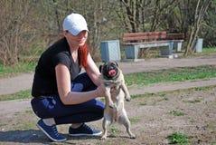 Den unga hunden av aveln som en mops vid Bonnie smeknamn går i parkera Royaltyfria Bilder