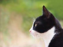 Den unga katten som är svartvit, (12), närbilden, sida beskådar Fotografering för Bildbyråer
