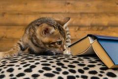Den unga kattungen sitter och ser under den stängda gamla boken royaltyfria bilder
