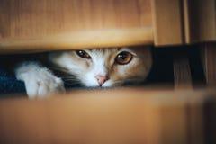 Den unga kattungen st?ngde sig i en ask och spelade royaltyfria foton